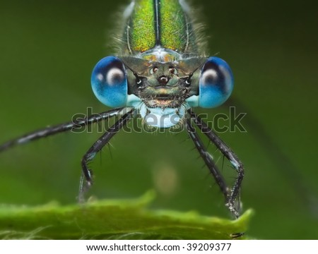 Portrait of Emerald Damselfly