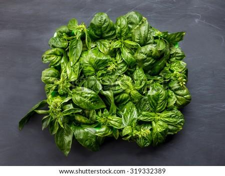 portrait of fresh basil leaves on black board for background - stock photo