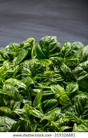 portrait of fresh basil leaves on black board for background with copy space - stock photo