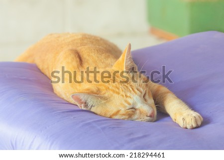 Portrait of funny sleeping cat face - stock photo