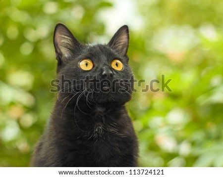 Portrait of funny young black cat on the background of green foliage - stock photo