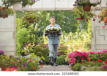 Portrait of gardener carrying crate with flower pots while entering greenhouse - stock photo