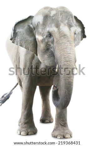 Portrait of giant elephant standing over white background - stock photo
