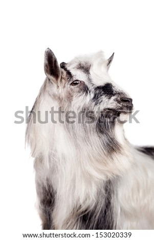 Portrait Of Goat Isolated On White Background