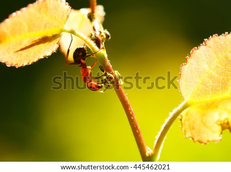 portrait of graceful ant formica rufa on branch - stock photo
