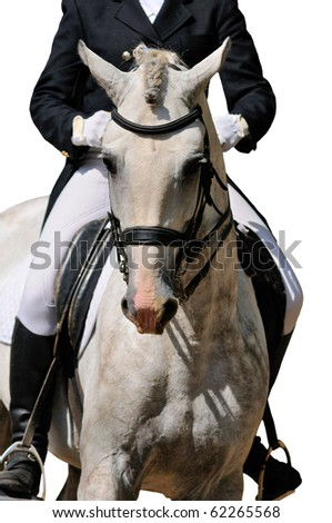 Portrait of gray dressage horse isolated on white - stock photo