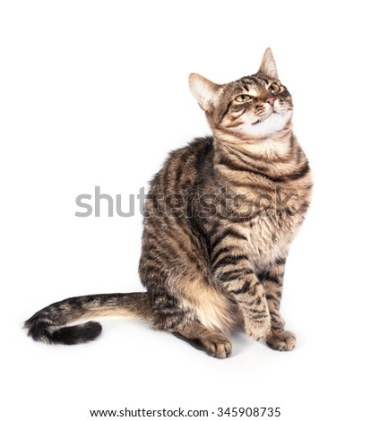 Portrait of green eyed cat isolated on white background