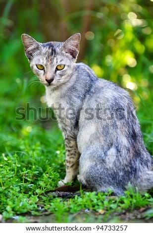 Portrait of grey cat. - stock photo