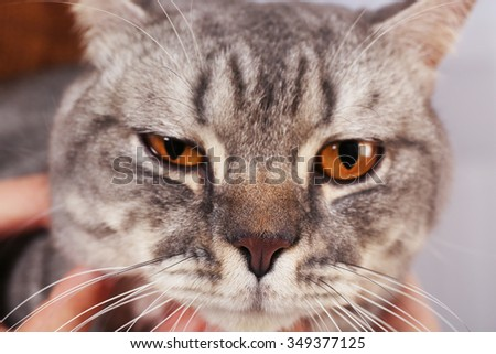 Portrait of grey cat, close up - stock photo