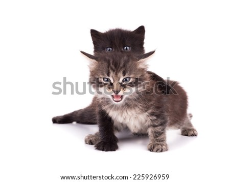 Portrait of group of young cats. Studio shot. Isolated.