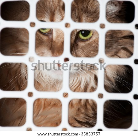 Portrait of homeless cat in cage - stock photo