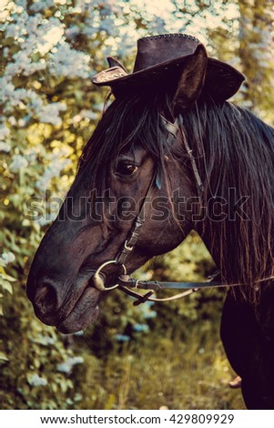 Portrait of horse head in cowboy hat. - stock photo