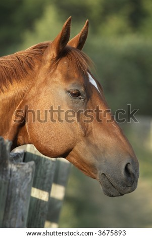 Portrait of horse; Horse head image close