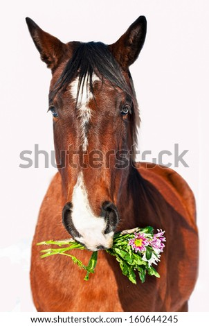 Portrait of horse with flowers isolated on white - stock photo