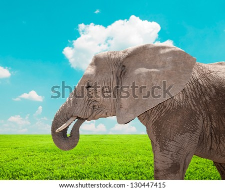 Portrait of huge African elephant in nature - stock photo
