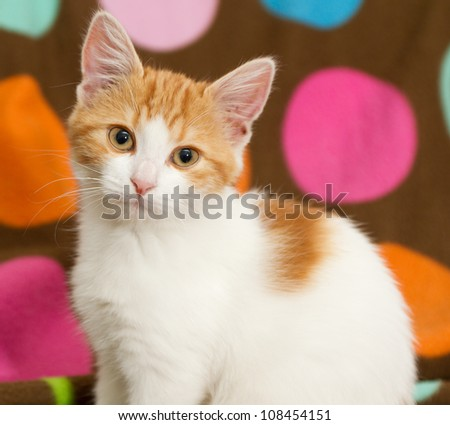Portrait of kitten - stock photo
