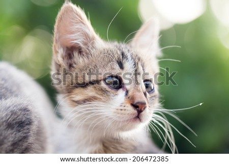 portrait of kitten