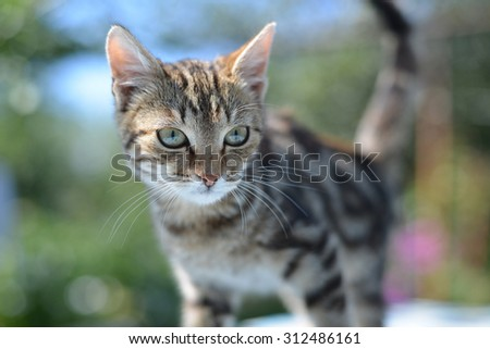 Portrait of leopard print cat in a  nature