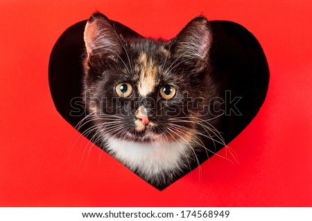 Portrait of little kitten peeking out of valentine heart - stock photo