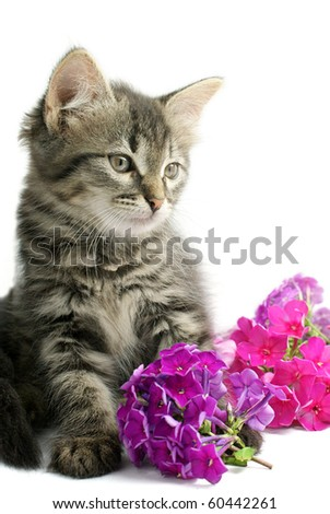 Portrait of little kitten with flowers on white background