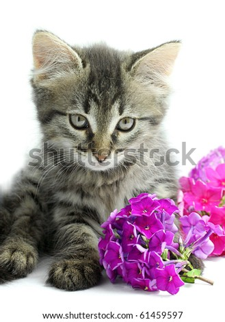 Portrait of little kitten with flowers on white background - stock photo