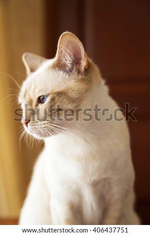Portrait of little Mekong cat looking left - stock photo