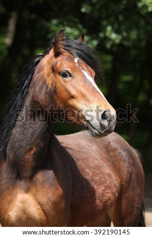 Portrait of lovely brown pony with nice black mane looking at you - stock photo
