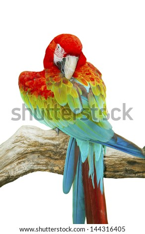 Portrait of Macaw in isolated white background - stock photo