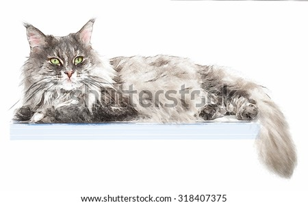 Portrait of maine coon cat, isolated on white background. Digital illustration in draw, sketch style.  - stock photo
