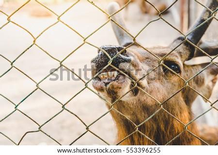Sad Monkey Cage Stock Photo 47566594 Shutterstock
