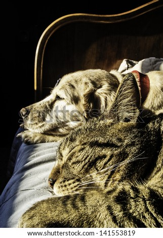 Portrait of male cat and female dog sleeping together - stock photo