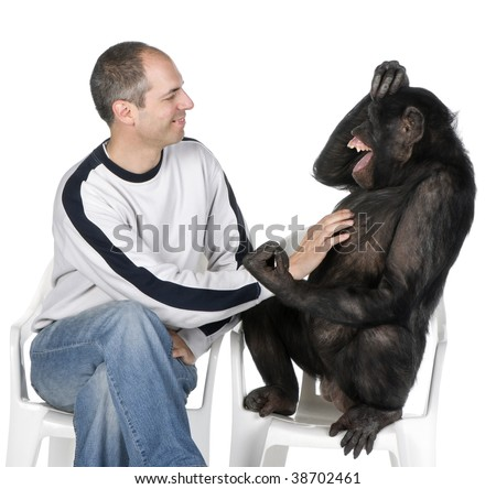Portrait of mid adult man tickling chimpanzee against white background, studio shot. Mixed-Breed between Chimpanzee and Bonobo (20 years old)