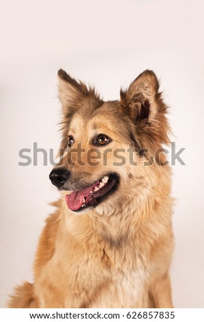 Dogs are sensitive to small variations of the Earth's ...