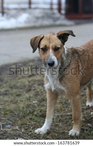 portrait of mongrel dog - stock photo