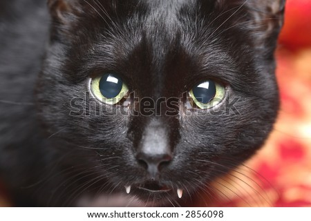 Portrait of My Saber-toothed Cat, Animals - stock photo