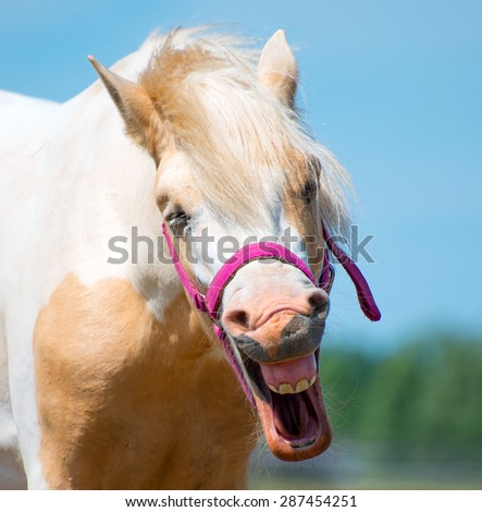 Portrait of Neighing horse with bridle. - stock photo