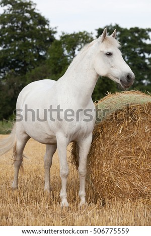 Portrait of nice horse posing on field