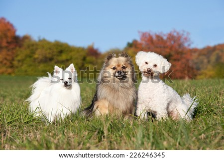 Portrait of nice three dogs - stock photo