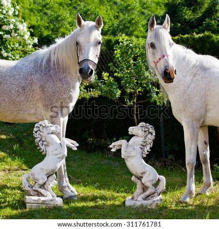 Portrait of nice two arabian horses - stock photo