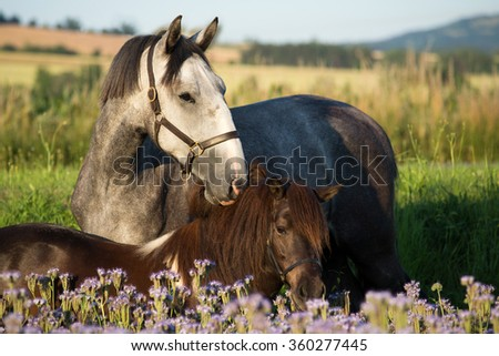 Portrait of nice two horses on meadow violet flowers