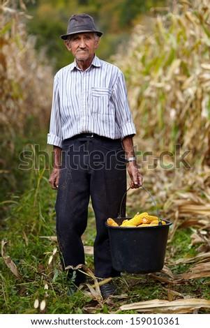 Portrait of old farmer holding a bucket full of corn cob - stock photo