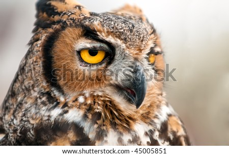 Portrait of Owl in natural environment, with detail and focus in the eye. - stock photo