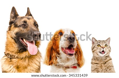 Portrait of pets closeup isolated on white background - stock photo