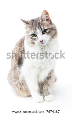 portrait of pretty kitty with green eyes isolated on white - stock photo