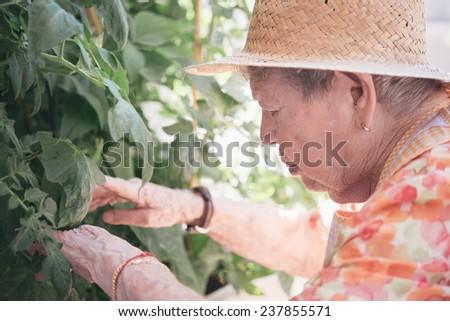 Portrait of pretty senior woman with flowers - stock photo
