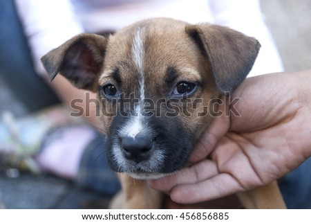 Portrait of puppy in shelter waiting for new owner  - stock photo