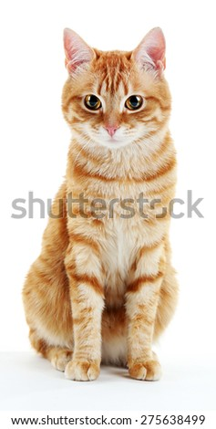 Portrait of red cat isolated on white