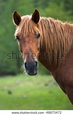 Portrait of red horse on blurred green background - stock photo