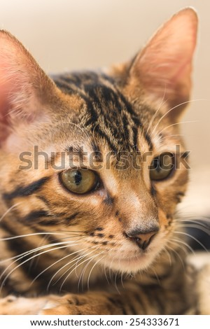 Portrait of red tabby kitten close-up. Shallow depth of field. - stock photo