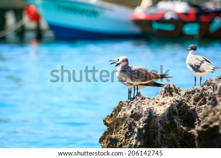 Portrait of seagulls in a beautiful mexican harbor - stock photo